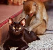 All Kitties Should Have Massage Monkeys