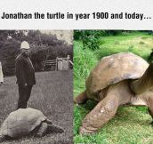 Johnathan The Turtle Is Really Old