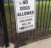 No Dogs Allowed Here