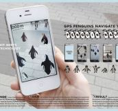 The Most Amazing App Ever, A GPS With Penguins That Tell You Where To Go
