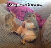 Lazy Pet Squirrel