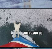 A Very Helpful Polar Bear