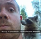Raccoon Secrets