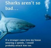 Sharks Aren't So Bad After All