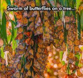 Swarm Of Butterflies On A Tree