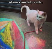 Such A Colorful Cat