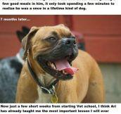 Amazing Dog Story