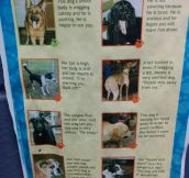 Learn To Read A Dog's Body Language