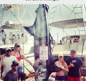 The Blue Marlin Master