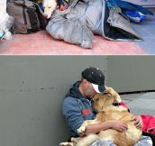Dogs Love Humans Regardless Of Their Status