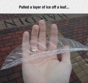 Leaf Of Ice