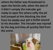 Here's Why Pit Bulls Are Seriously Misunderstood