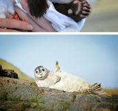 Very Friendly Animals