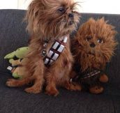Dog In Chewbacca's Cosplay