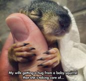 Baby Squirrel Giving Love