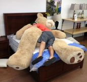 Giant Teddy Bears Are The Best