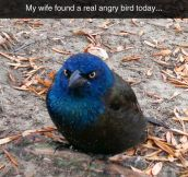 This Guy Is A Real Life Angry Bird