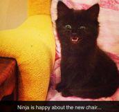 Evil Mastermind Cat