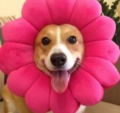 I'm A Beautiful Flower