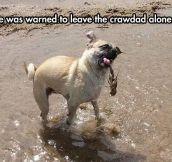 Dog Was Warned