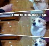 Deny Everything, Dog