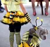 Dog Bee Cosplay: Just End My Suffering