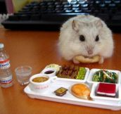 Tiny Hamster Enjoying A Tiny Nutritious Lunch