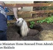 Miniature Horse Rescue