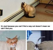 Pets That Are Bad At Hide And Seek