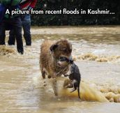 Dog And Her Puppy In A Flood