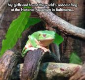 The Saddest Frog I've Ever Seen