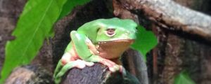 The Saddest Frog I've Ever Seen