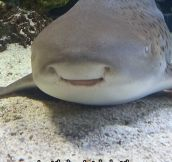 The Happiest Shark