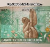 In Sloth We Trust