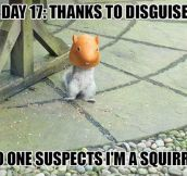 Undercover Squirrel