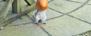 Undercover Squirrel