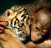Love Between Baby Animals