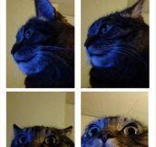 Catprise