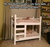 The Cutest Kitty Bunk Beds