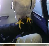 Found An Arctic Gyrfalcon In My Flight
