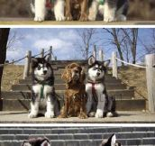A Tale Of Three Dogs