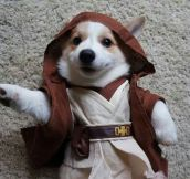 Jedi Master Of Adorableness