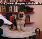 What Is This, A German Sheppard For Ants?