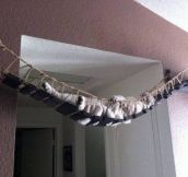 Cat bridge ………Isn't cool