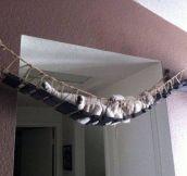 Cat bridge ………Isn't cool