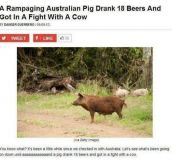 This Only Happens In Australia
