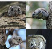 Those Big Squirrel Eyes