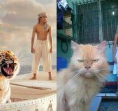 Life Of Pi: Nailed It