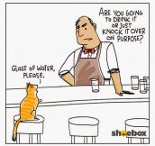 Cat Walks Into A Bar