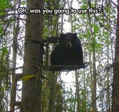 Bears Are Getting Pretty Intelligent